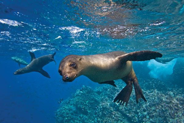 Lindblad Expeditions & National Geographic