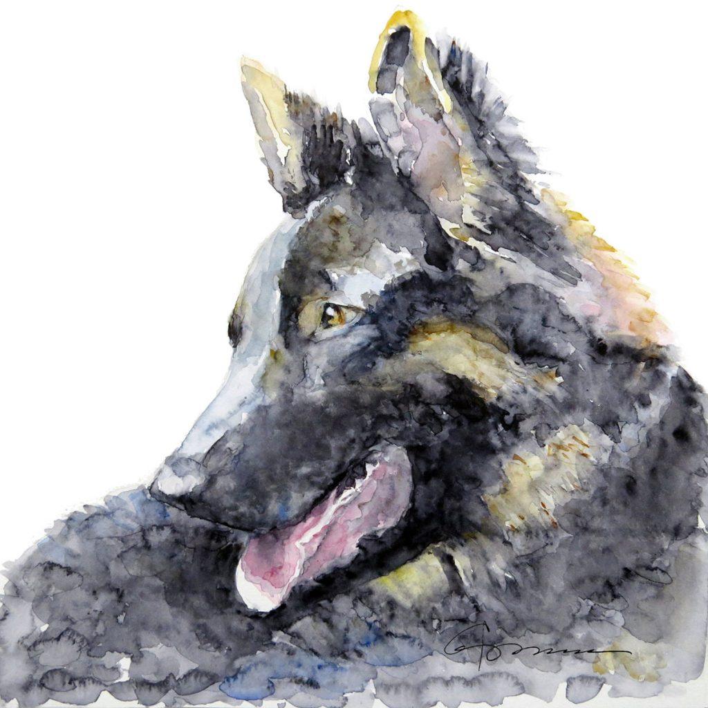 """""""German Shepherd,"""" a watercolor piece by Claudia Hafner"""