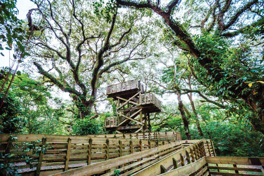 Tree Tops Park. Photo by Anthony Rayburn