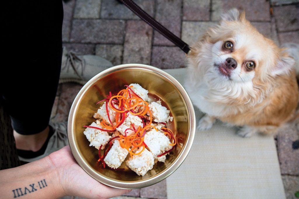 Casa Sensei doggie sushi