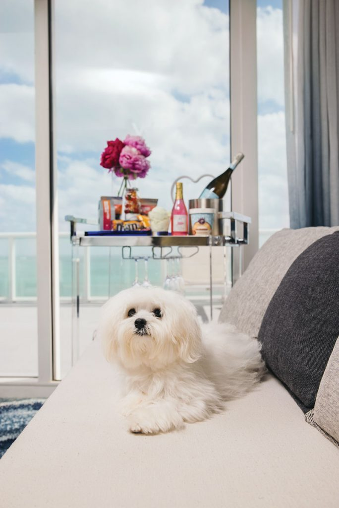 W Fort Lauderdale Dogs are a Girl's Best Friend Staycation package